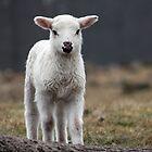 It is Spring by Jo Nijenhuis