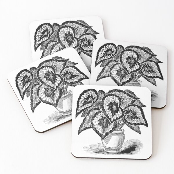 Victorian illustration of Rex Begonia Coasters (Set of 4)