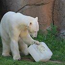 Polar Bear Perfection  by Okeesworld