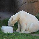 Polar Ice Party by Okeesworld