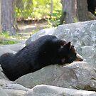 Bear Nap by Okeesworld