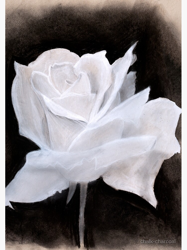 Chalk & Charcoal White Rose Drawing Notebook by chalk-charcoal