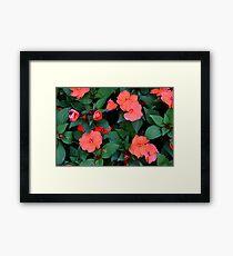 Red orange flowers in the green bush. Framed Print