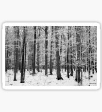Shawano in Winter No. 2 Sticker