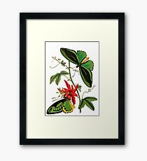 FF - Butterfly-5 Framed Print