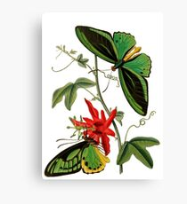 FF - Butterfly-5 Canvas Print