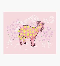 Goat rolled on flower garden  Photographic Print