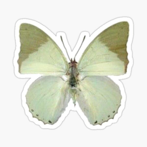 sage green moth Sticker
