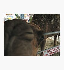 """""""Upclose, Closeup""""... prints and products Photographic Print"""