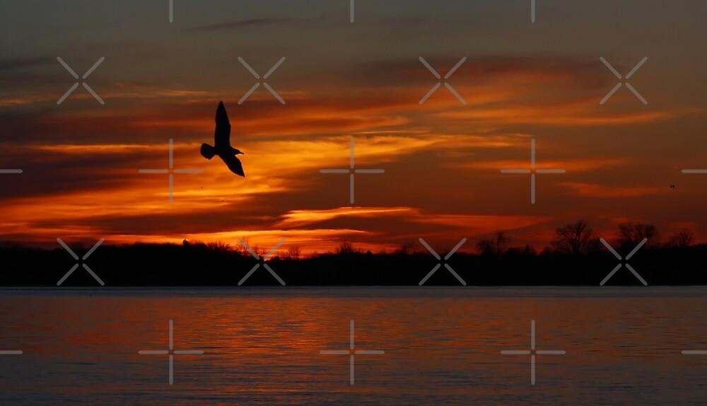 Red sky flight - Seagull by Jim Cumming