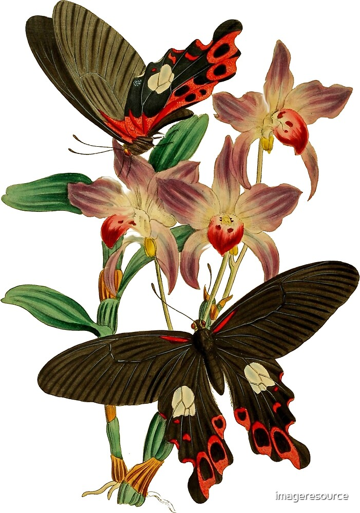 FF - Butterfly-6 by imageresource