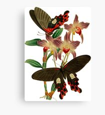 FF - Butterfly-6 Canvas Print