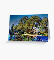 A Pond at Brookgreen Gardens Greeting Card