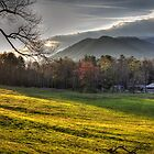 Cades Cove, Spring 2016, II by Douglas  Stucky