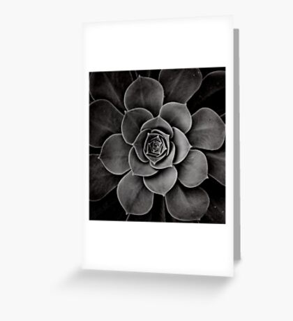 levels of plant Greeting Card