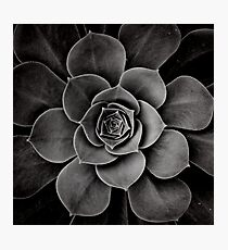levels of plant Photographic Print