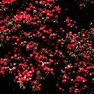Camelia bush by Karen  Betts