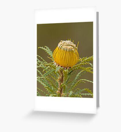 Dryandra stuposa  Greeting Card