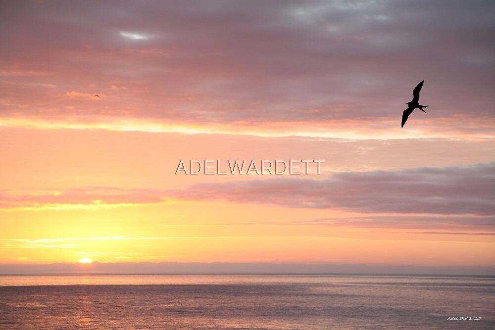 Galapagos Perfection - Limited Edition Print 1/10 by ADELWARDETT