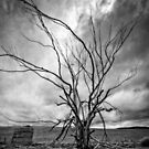Dead Tree and Old Water Tank by David J Baster