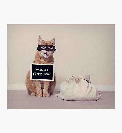The Catnip Thief Photographic Print