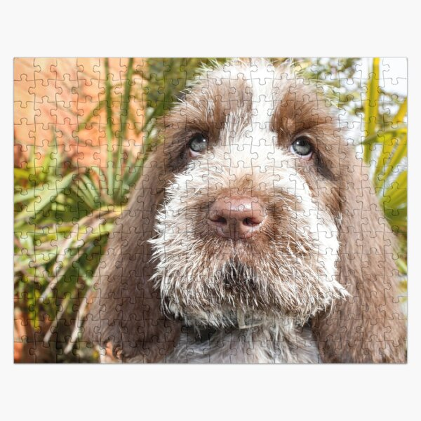 Sitting puppy Spinone  Jigsaw Puzzle