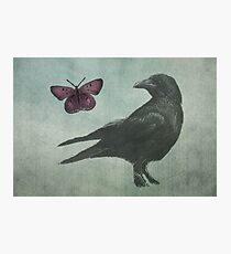 Black Crow and Butterfly Photographic Print