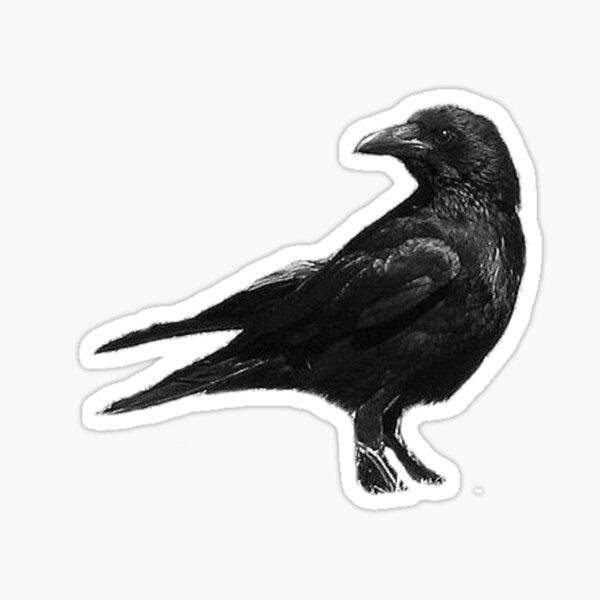 Black Crow Sticker