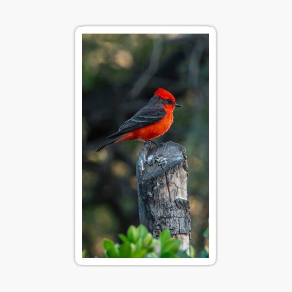 Vermilion Flycatcher Sticker