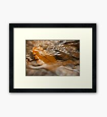 Stream Framed Print