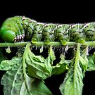 Katy Katerpillar, side view by Heather Friedman