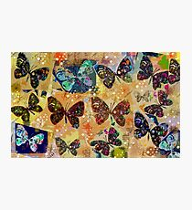 Butterflies in Spring Snowstorm Photographic Print