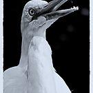 GW Egret...in B&W... by Wieslaw Jan Syposz