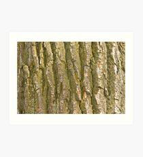 Cottonwood Tree Bark Texture Art Print