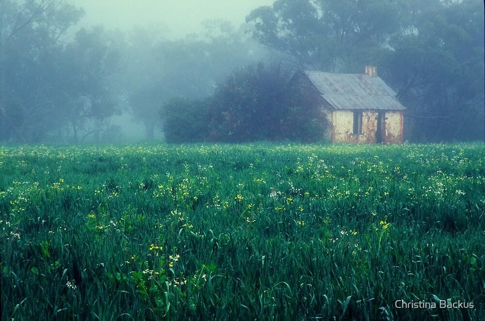 Misty Morning by Christina Backus