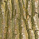 Tree Bark Texture Vertical by Bo Insogna
