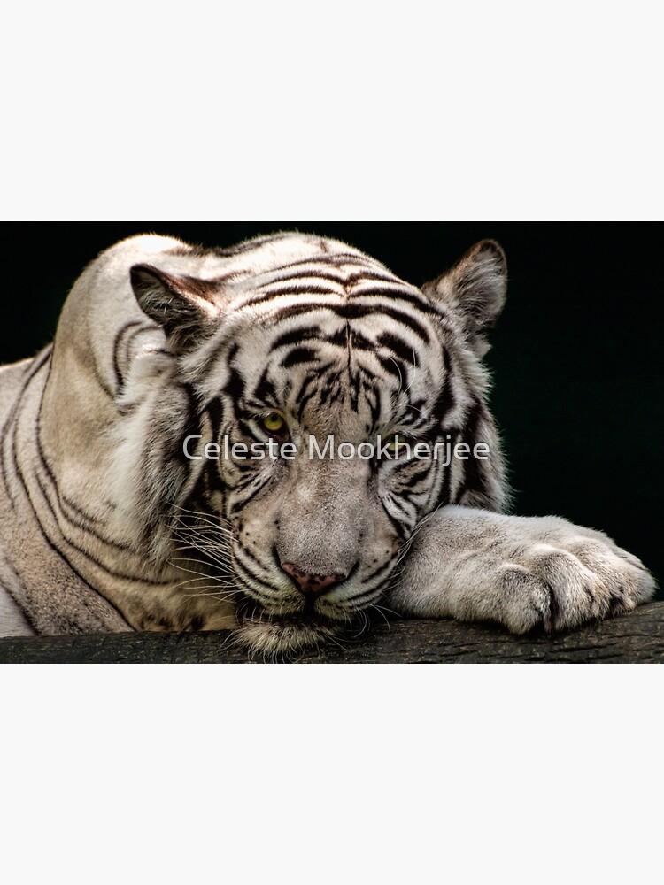 Weißer Tiger von celestem