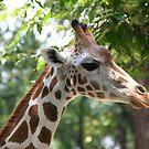 Giraffe by Wendy Sinclair