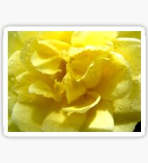Yellow Banksia rose Sticker