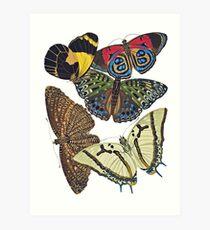 FF - Butterfly-7 Art Print