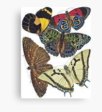 FF - Butterfly-7 Canvas Print