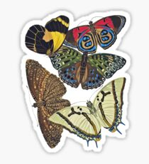 FF - Butterfly-7 Sticker