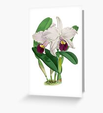 Vintage - TIR-Flower-Orchid-2 Greeting Card
