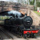 Pines Express - 53809 by Beverley Barrett