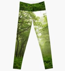 Pathway in Green Forest Leggings