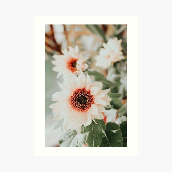 Pastel sunflowers Art Print