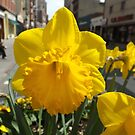 Colorful Spring Flowers, Newark Avenue, Jersey City, New Jersey by lenspiro