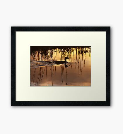 Great Crested Grebe in Silhouette Framed Print