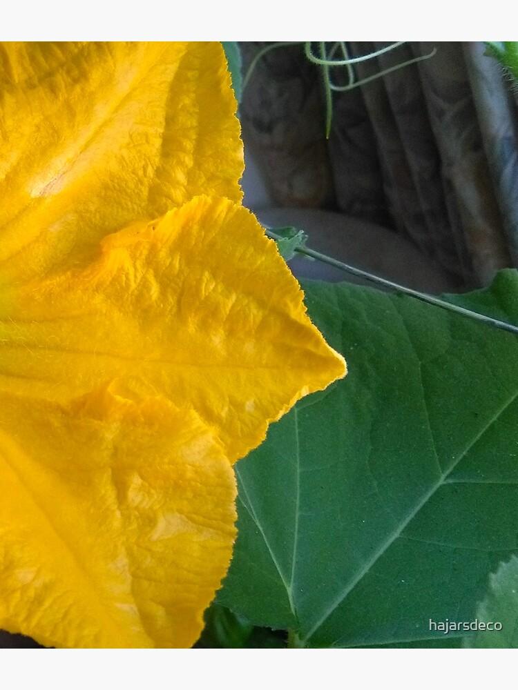 Pumpkin Blossom & Foliage by hajarsdeco