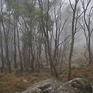 Misty Morning, Mount Macedon by MIchelle Thompson